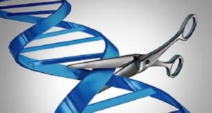 Human genome editing:We should all have a say